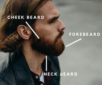 anatomy of a beard