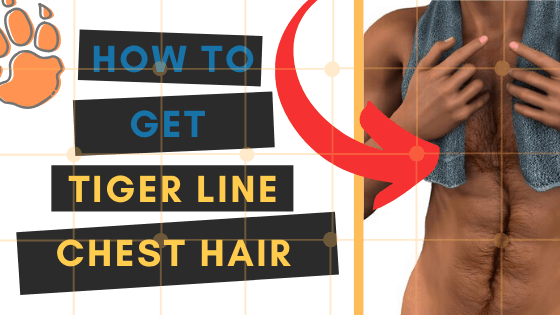 learn exactly how to trim the perfect tiger line chest hair